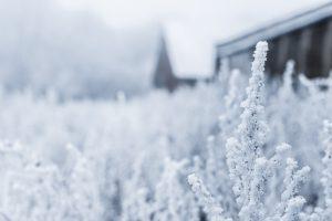 winter outdoors