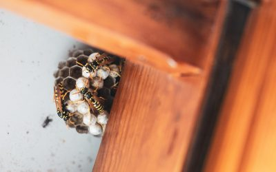 How to protect your home from pests during renovations