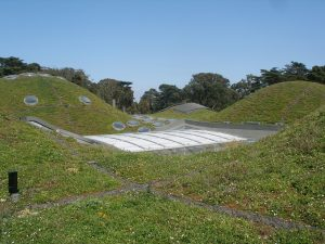 green roof top