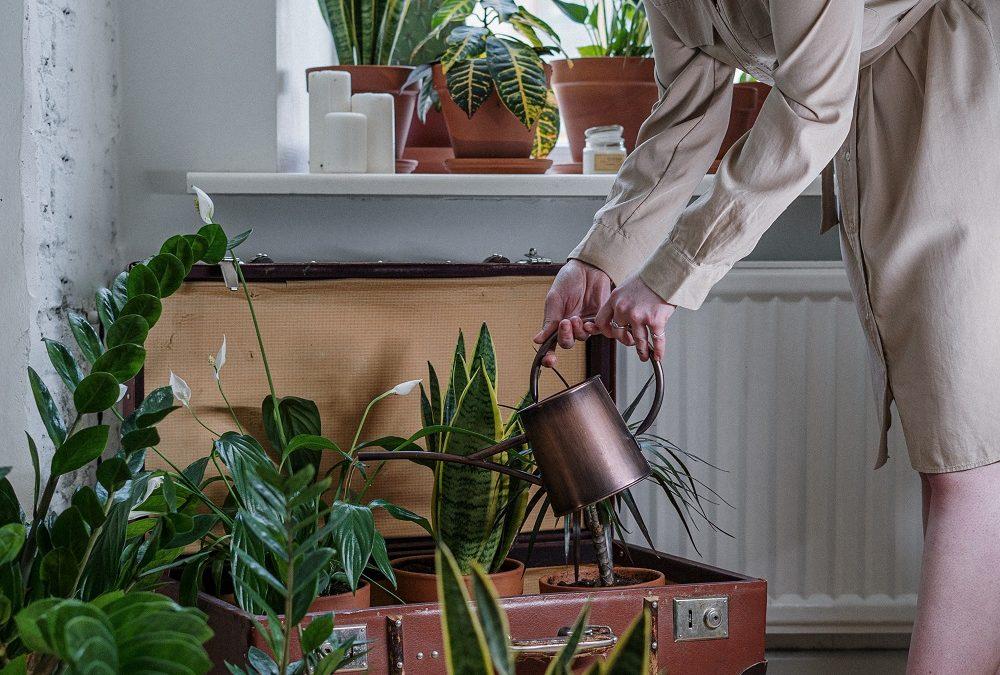 woman setting planters
