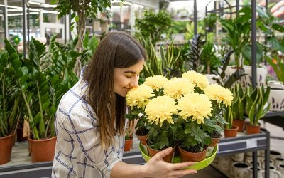 All About The Commercial Gardening And Its Dynamics